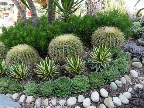 Soil Mix For Outdoor In Ground Succulents - preparing soil for succulent garden garden ftempo