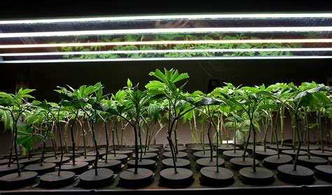 how to lower humidity in a grow room grow room humidity humidity in grow room growace