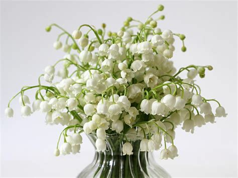 Wedding Bouquet Of The Valley by Of The Valley Flower Bouquet Www Pixshark