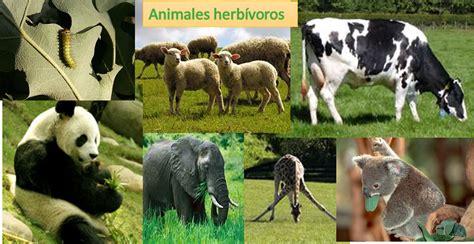 imagenes animales carnivoros herviboros omnivoros 4 como se alimentan 171 world family animal