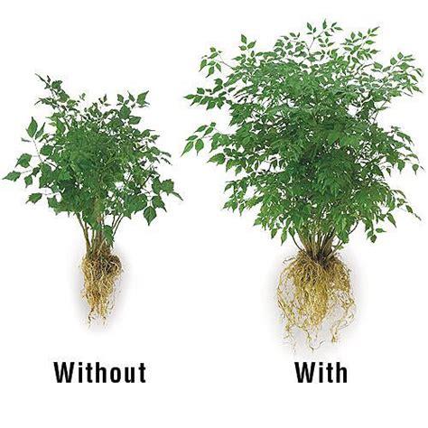 patio plus soil soil moist mycorrhiza flower and garden plus plant food gardener s edge