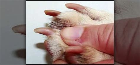 how to clip puppy nails how to clip a s nails properly 171 dogs