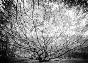 The unusual tree on landscape