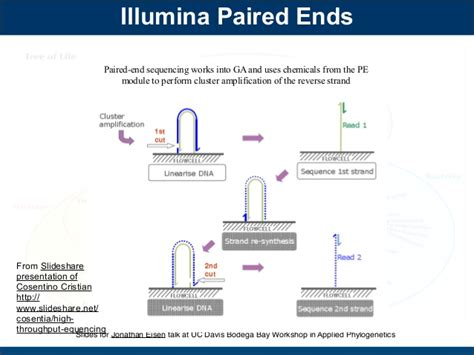 illumina sequencing principle evolution of dna sequencing talk by jonathan eisen for