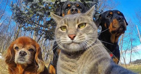 animal selfies  picture    point