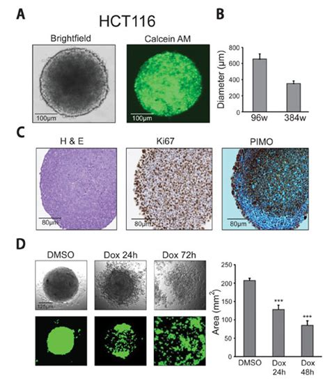 pattern formation cell culture 3d high content analysis of spheroids gen
