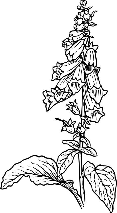 onlinelabels clip art foxglove