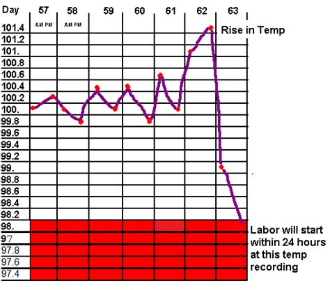 puppy temperature taking your dogs temperature to determine when possible labor will begin i need to
