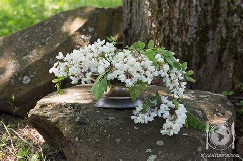 acacia fiore fiori da mangiare frittelle con fiori di acacia