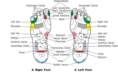 Reflexology And Detoxing by Foot Care Detoxing Through The