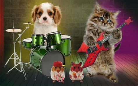 cat guitar wallpaper funny band cats animals background wallpapers on