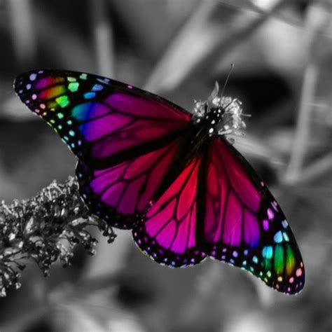 imagenes jpg mariposas amocito coraz 243 n mariposas