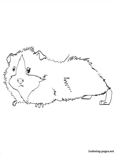 Guinea Pig Printable And Coloring Page Coloring Pages Guinea Pig Colouring Pages