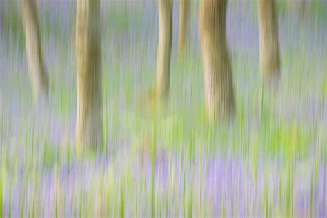 Best Home Colour Bluebell Woodland Blur Perthshire Scotland Graham