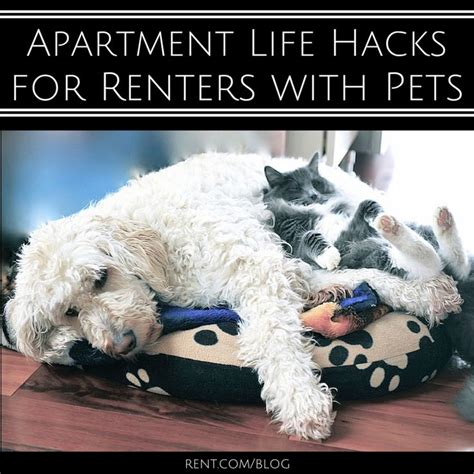 good appartment dogs best 25 apartment dog ideas on pinterest apartment