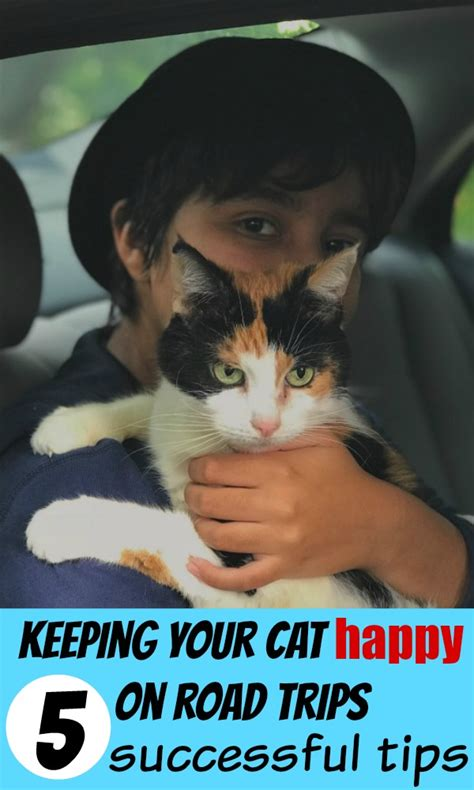 Tips For Keeping Your Car On The Road by How To Keep Your Cat Happy On Road Trips 5 Successful