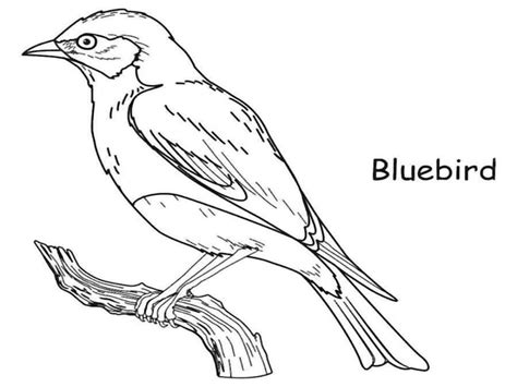 blue bird colouring pages printable coloring pages blue bird coloring page