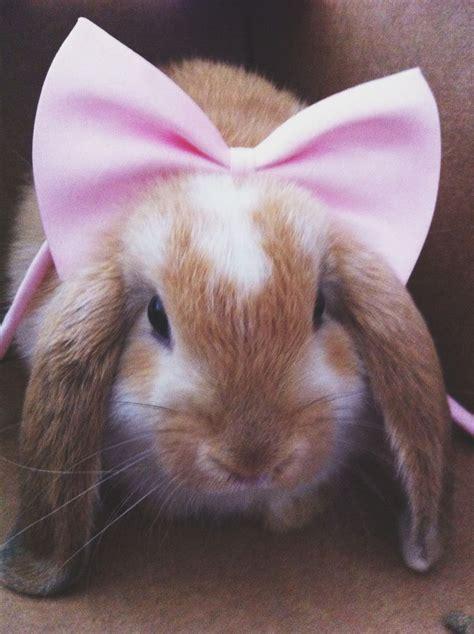 Mam Care Rabbit Pink 247 best bunny l