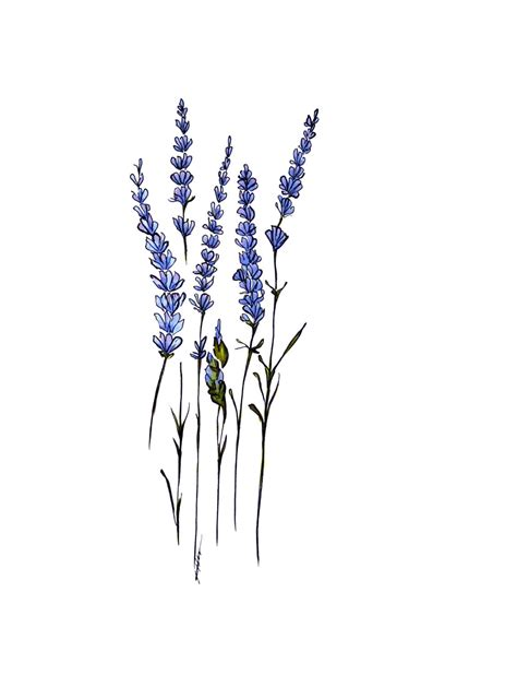 candlestick pattern for lupin lavender sprig drawing www imgkid com the image kid