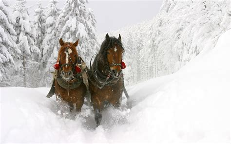 christmas wallpaper with horses animal wallpapers horses in snow