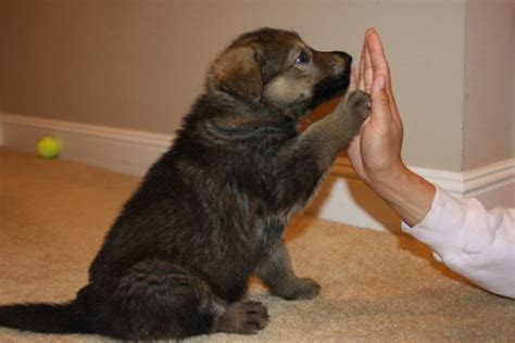 how to a to high five how to make your to high five doglers