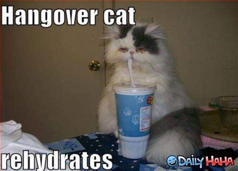 Funny Hangover Memes - www dailyhaha com pics hangover jpg memes