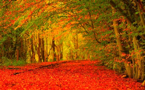 google images of fall autumn wallpaper widescreen echomon