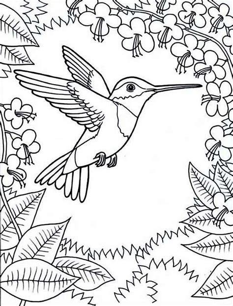 coloring pages for adults hummingbird hummingbirds framed by flowers hummingbird coloring