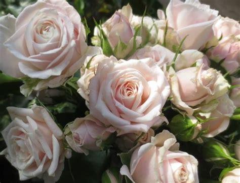 muscadet spray roses pinterest spray roses crowns