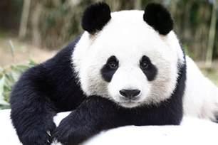 panda garden grand opening