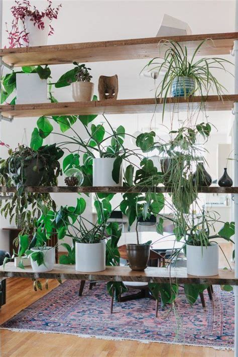 apartment plants ideas 639 best home interiors with plants images on pinterest