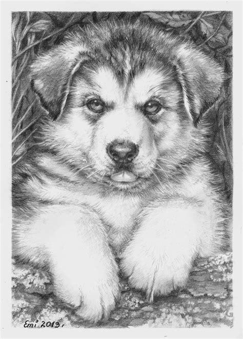 husky puppy drawing husky puppy by ninsianna on deviantart