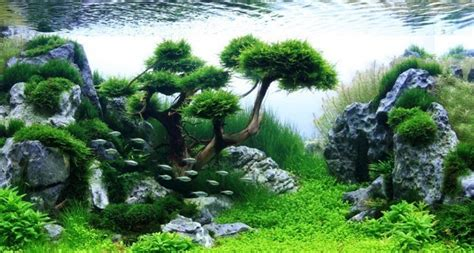 membuat bonsai aquascape mini cahunitcom