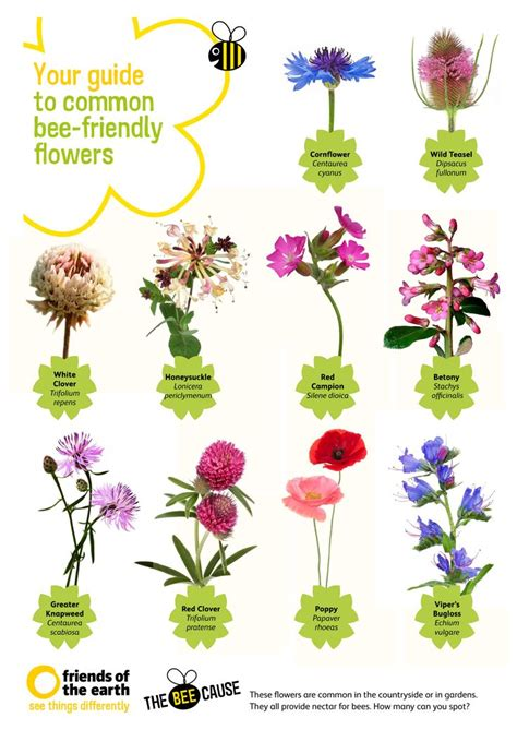 List Of Garden Flowers Your Guide To Common Bee Friendly Flowers Quot Our Free Poster At Http Www Foe Co Uk