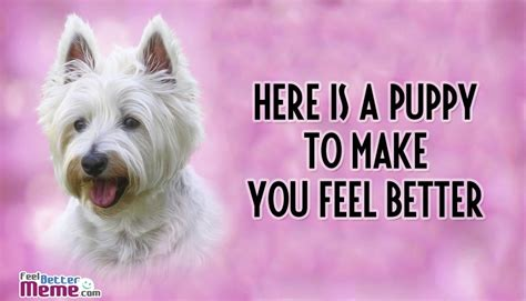feel better meme the gallery for gt feel better puppy