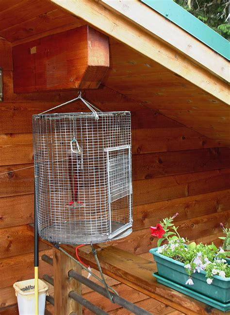 hummingbird trap photo eddie fisher photos at pbase com