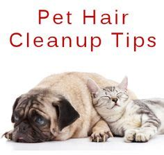 getting dog hair out of couch 1000 ideas about remove pet hair on pinterest cat urine