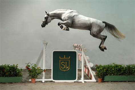 Did Stapp Jump Because He Got High by Free Lunge Jumping Equestrianne