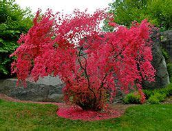 partial shade flowering shrubs pin by robinson on yard ideas