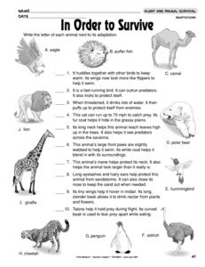 Animal Adaptation Worksheets by Results For Animal Adaptations Guest The Mailbox