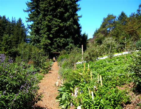 Garden Of Ucsc The Alan Chadwick Garden At U C Santa Today