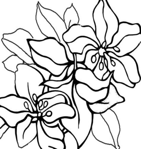 coloring pages of dogwood flowers dogwood flower clip clipart best