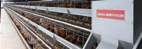 Pakan Ayam Untuk Walet cara ternak ayam pakan ternak ayam pedaging
