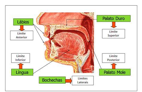 vestibulo oral que es sistema digest 243 rio sistema digestivo trato digest 243 rio