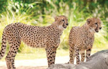 tampa zoo and animal habitats   busch gardens tampa bay