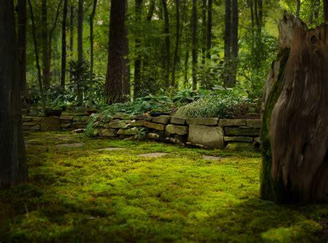 moss backyard landscaping birmingham al moss gardens lawns