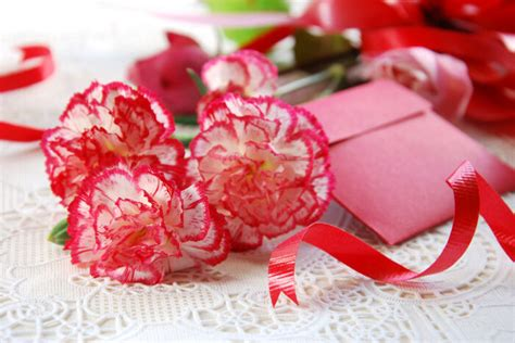 carnation color meanings carnation flower meaning flower meaning