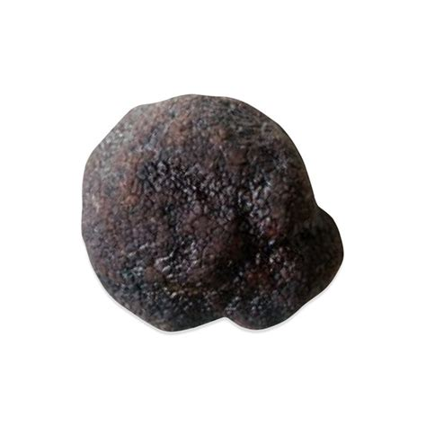 italian truffle fresh italian black summer truffles marx foods