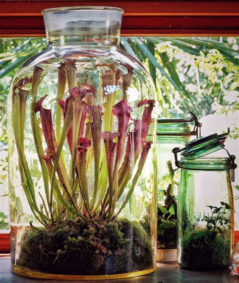 how to make a carnivorous plant terrarium carnivorous