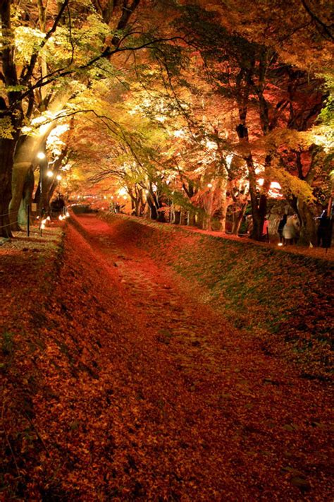 flower tunnel 30 tree tunnels that will take your breath away hongkiat